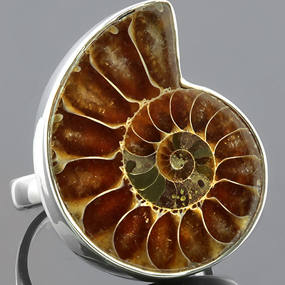 Silver and Ammonite Ring