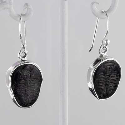 Silver and Trilobite Earrings