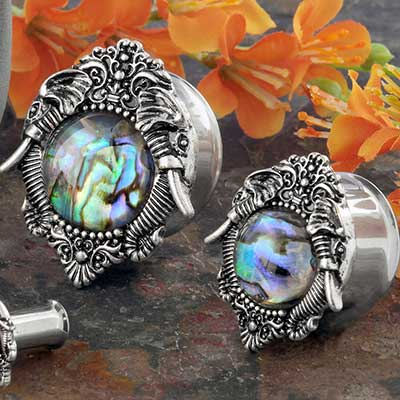 Elephant Abalone Shell Plugs