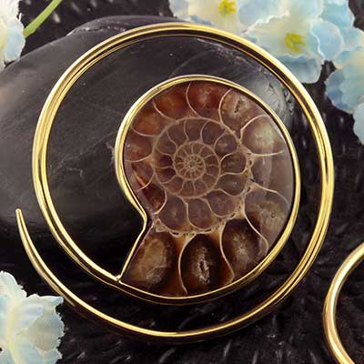 Solid Brass and Ammonite Spiral Weights