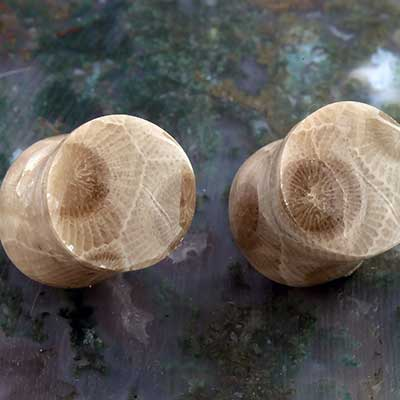 Petoskey Stone Plugs