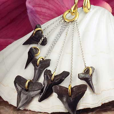 Solid Brass with Baby Megalodon Teeth Dangle Weights