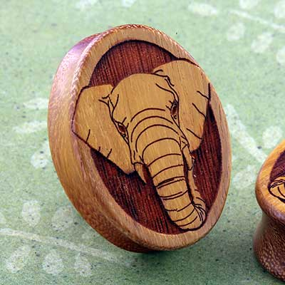 Osage Orange Elephant Oval Plugs